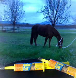 How to feed horse oral supplement