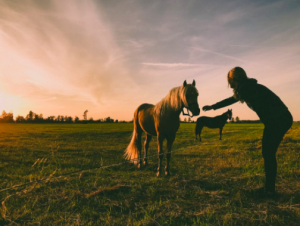 Cuts on horses