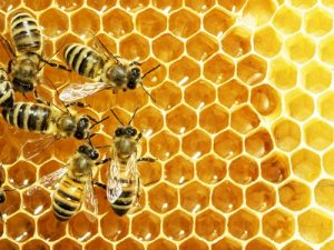 Honey is has antifungal, antibiotic and antiseptic properties.