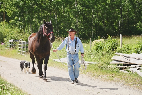 If your horse exhibits symptoms of PSSM, stop exercising and call your veterinarian.