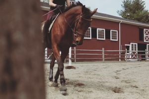 Here's how to care for common ailments suffered by horses with poor feet.