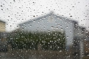 Rainy weather puts your horse at risk for skin diseases, bug bites and thrush.
