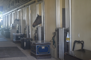 Common racehorse issues