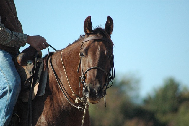 Post-workout facts every horse owner should know