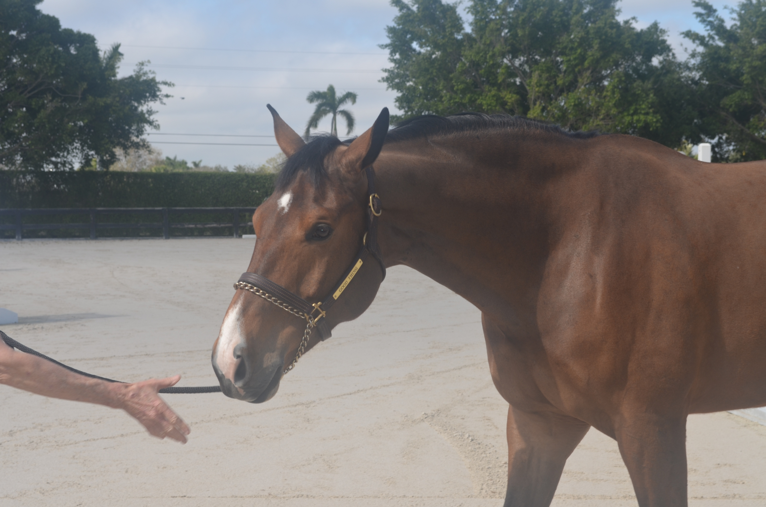 Understanding body language: Interpreting your horse's movements
