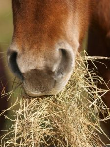 Introduce new hay or feed slowly over 10 to 14 days.
