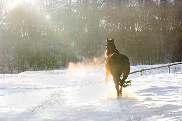 Keep horses safe and happy this winter.