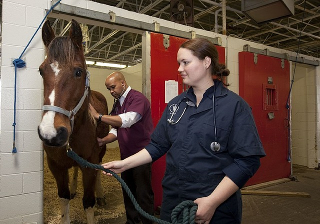 Vaccinating your horse is something that something that should be done regularly, but there are number of things to know before actually administering a shot.