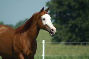 Muscle Building Performance Builder horse