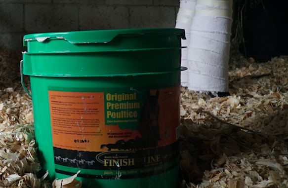 How and When to Apply Equine Poultice: A How-To Tutorial