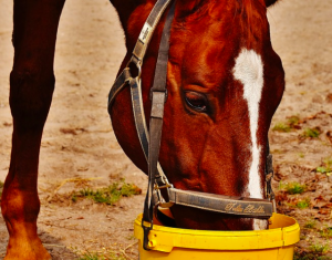Manage your feeding regimen to make it as simple, effective, and efficient as possible.