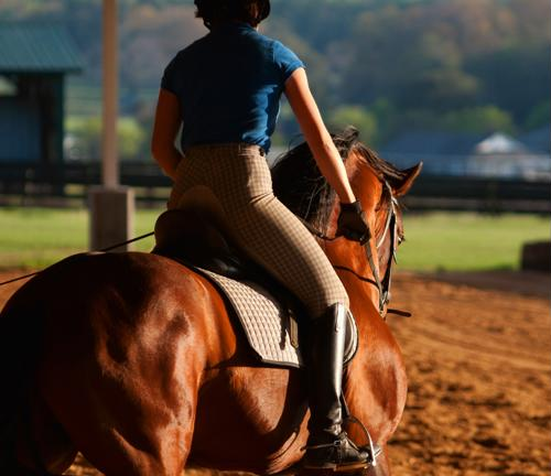 Conditioning is a best practice for getting horses to peak performance and physical fitness.