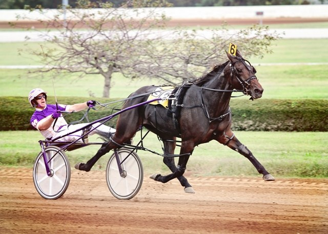Finish Line Standardbred horse on muscle tone