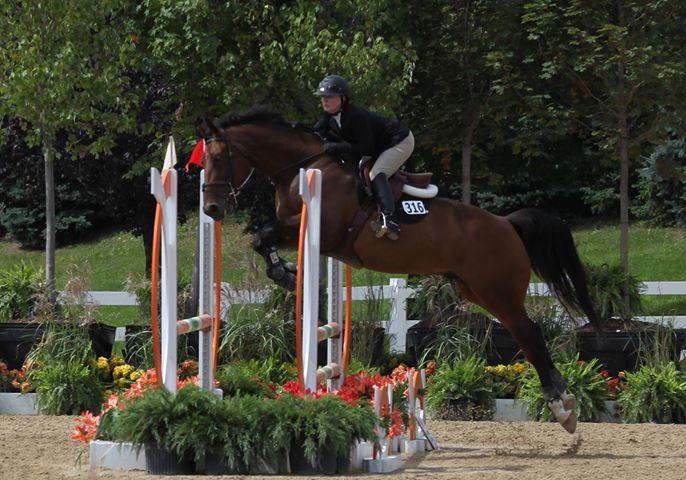 Jumper horse testimonial