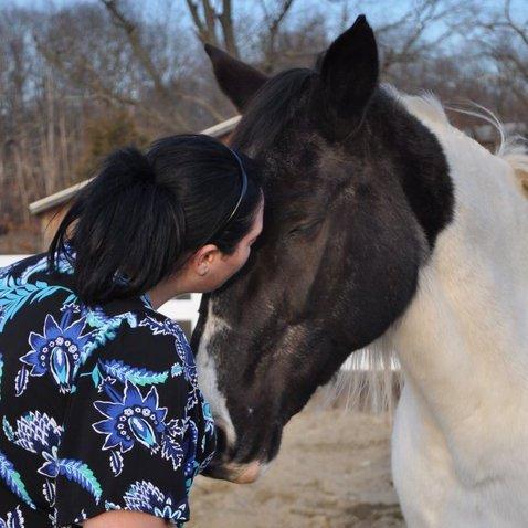 sweet horse photo