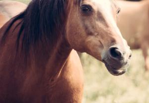 summer skin issues horses