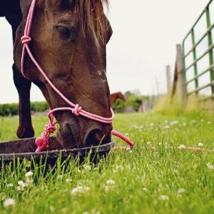 horse feed monensin