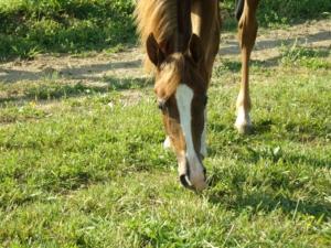horse eat supplements