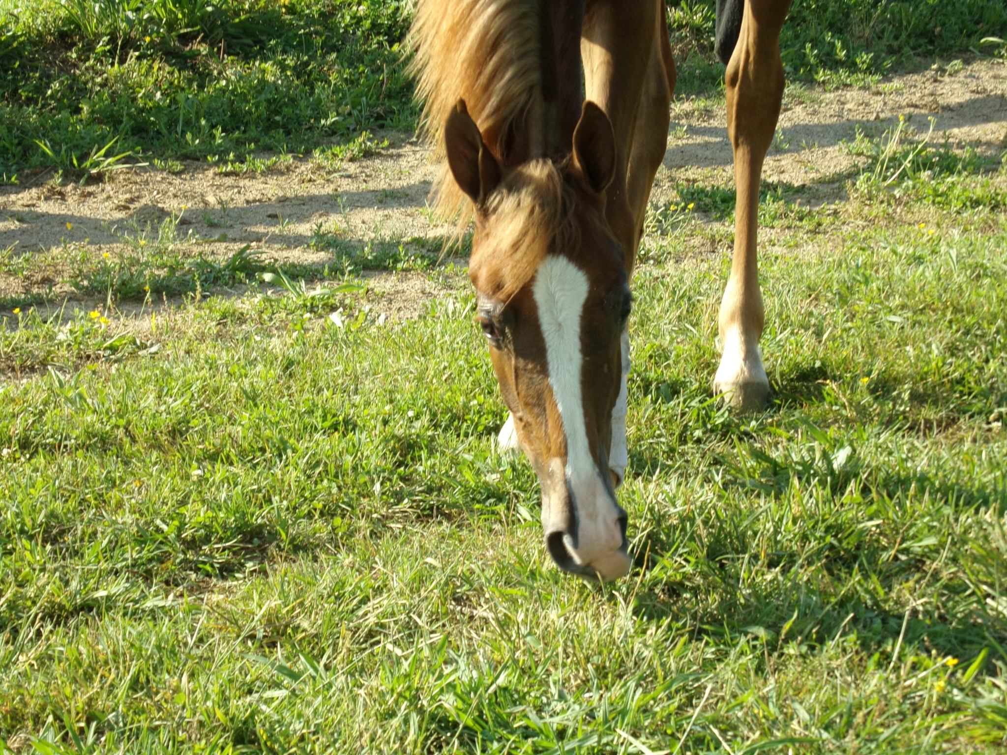 Your healthy horse: knowing when to supplement its diet