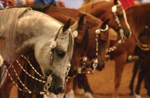 Scottsdale Arabian Show Sponsor