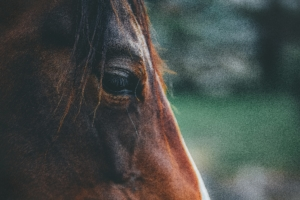 pain management for horses