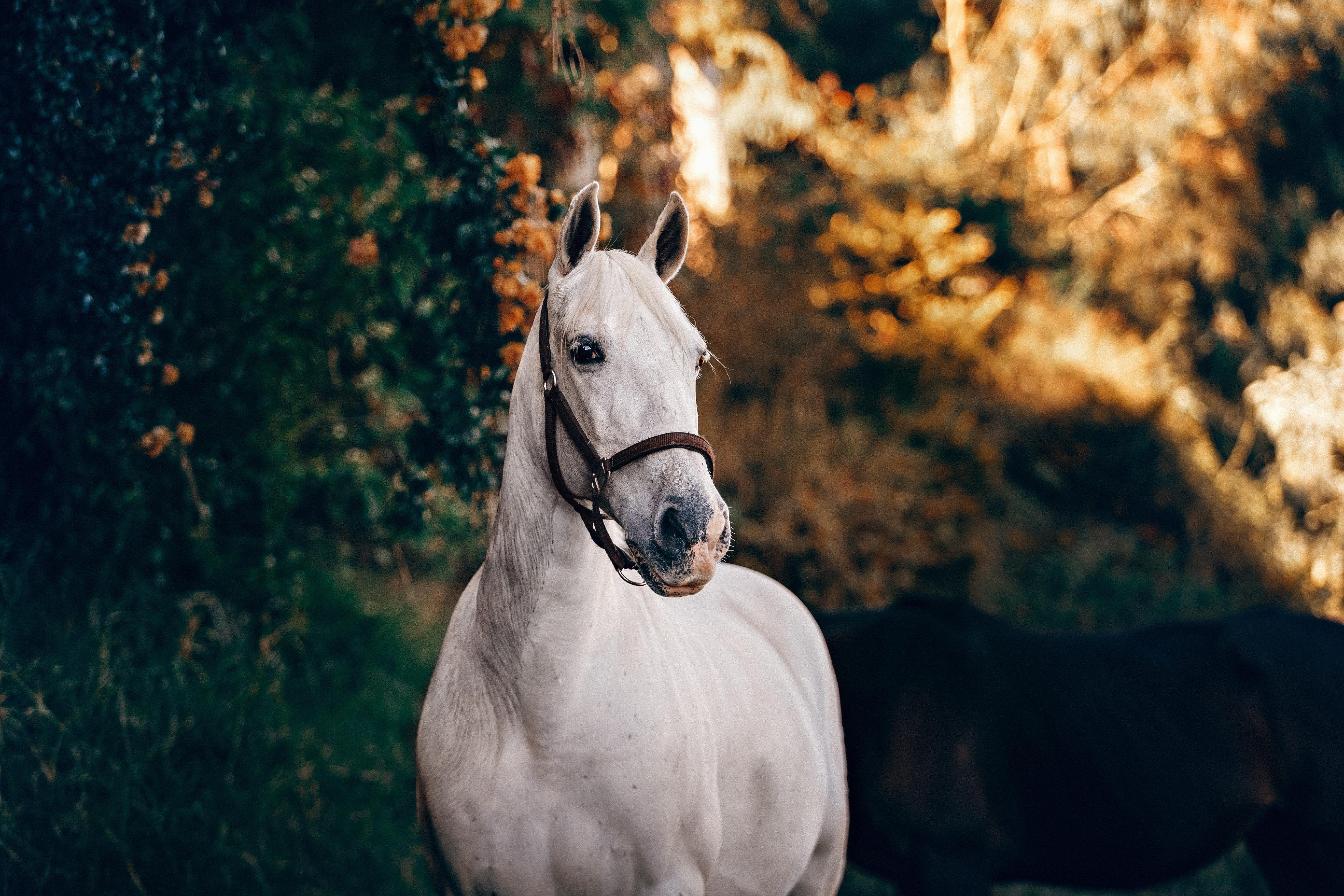 Understanding colic in horses