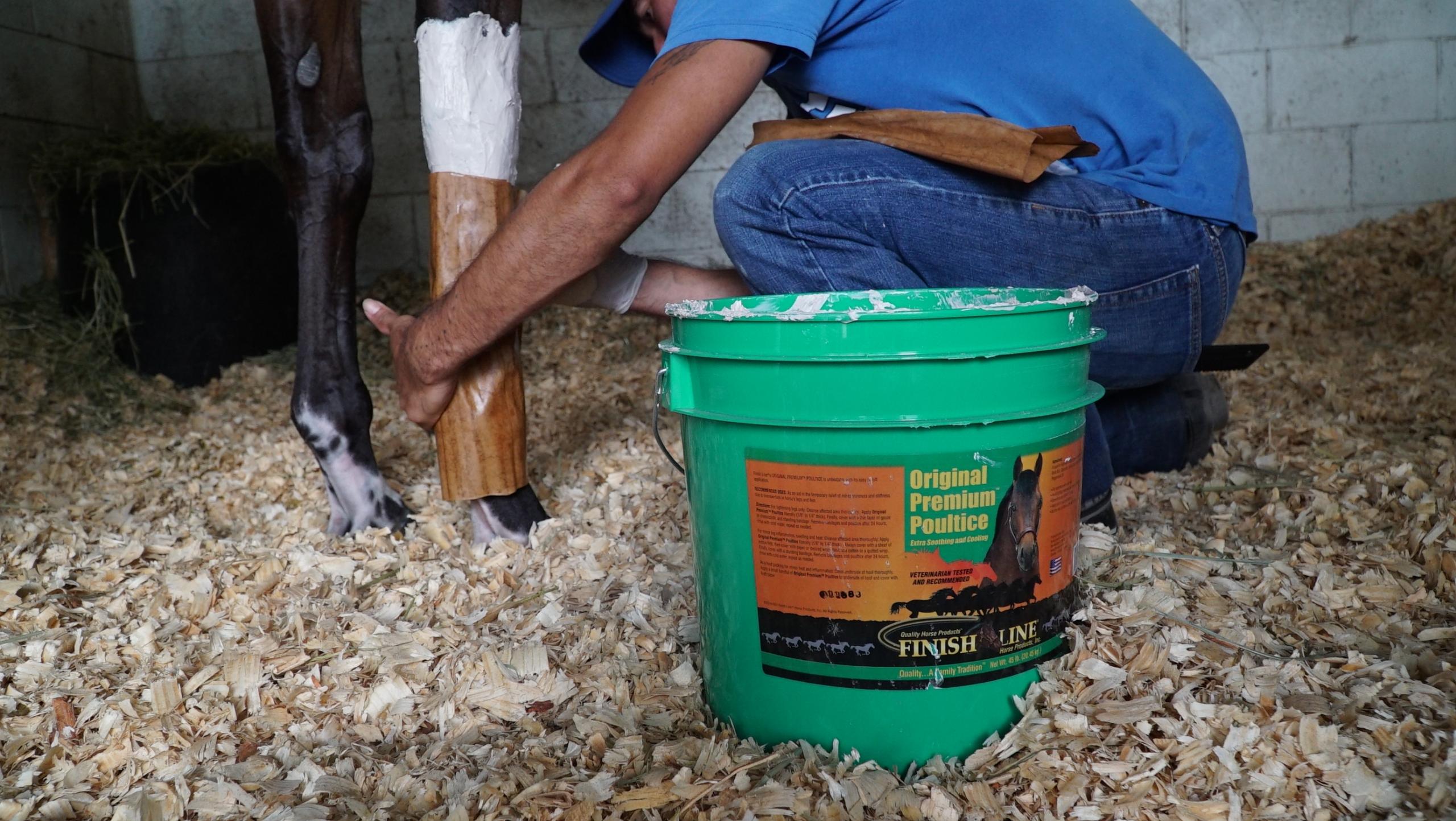 man examining horse hoof