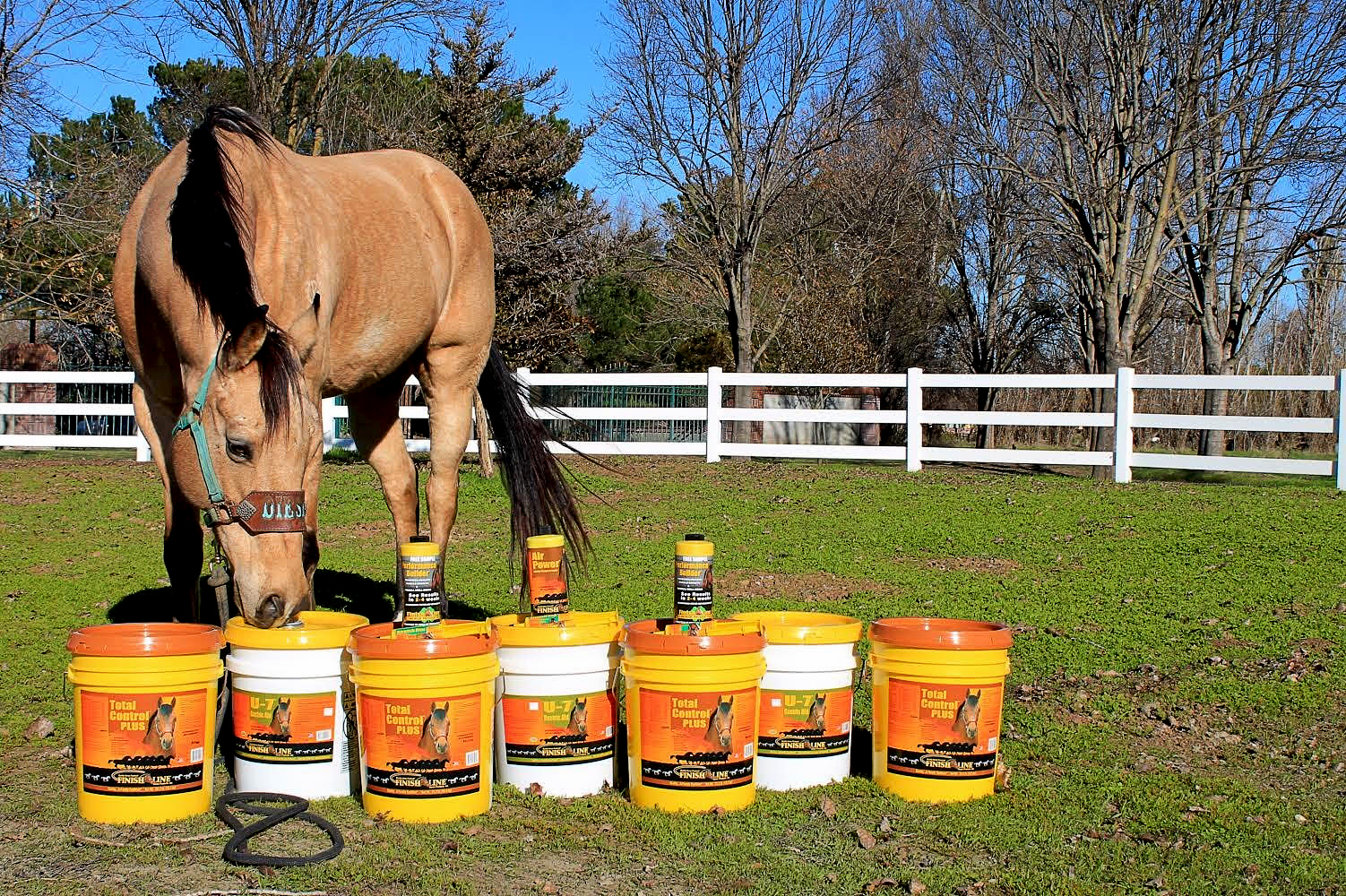 Horse with Finish Line Horse Products