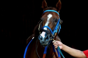 ATP Recovery in race horses