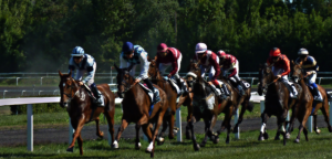 finish line horse products horse racing supplements