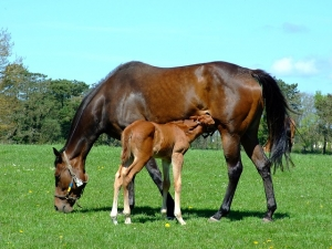 mothers day for horses