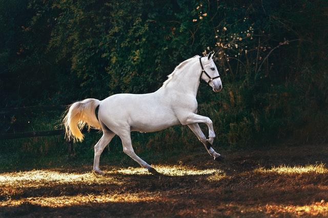 Leadership lesson horses