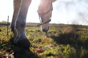 lameness signs in horses