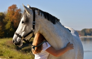 Owning first horse blog