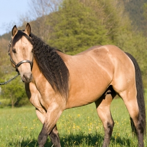 building muscle in horses