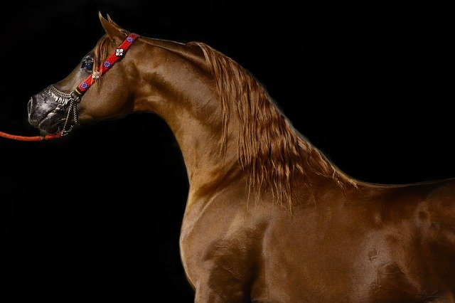 scottsdale arabian horses