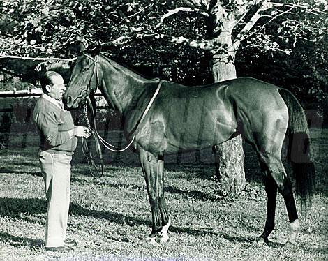 Angel Penna Finish Line Horse